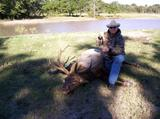 Great Elk taken in Texas