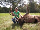 Very nice Bull Elk taken at Circle E Ranch in Texas