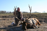 Fantastic Elk Bull taken in Texas at Circle E Ranch