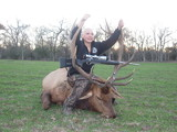 Great Elk Bull harvested by Natalie Hill - Circle E Ranch, Texas