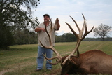 Great Bull Elk Taken at Circle E Ranch by Butch Darce