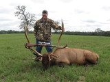 Elk Bull taken by Shane Flowers at Circle E Ranch in Texas