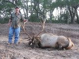 Elk Bull taken by Bill Thompson at Circle E Ranch in Texas