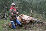 Elk Hunt in Texas - Great Elk Bull harvested by Krista Rumsey at Circle E Ranch in Texas