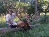 Elk Bull Hunt in Texas - Trophy Elk Bull harvested by Doug Cox at Circle E Ranch in Texas